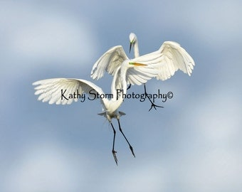 Fine art wildlife photography.   Great Egrets, Six in a series of six.     Wall art, Wedding or Anniversary Gift.  FREE SHIPPING!