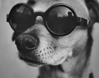 Hipster Dog - Black and white dog photography print