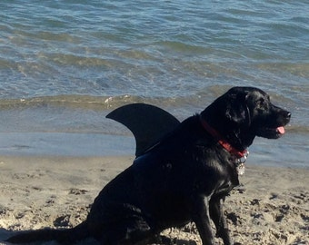 LARGE.  Dog shark fin.  Your shark dog will be a hit at the beach or park.  They're Lab tested!