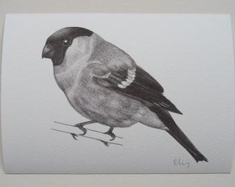 Bullfinch Illustration Giclee Print, A5