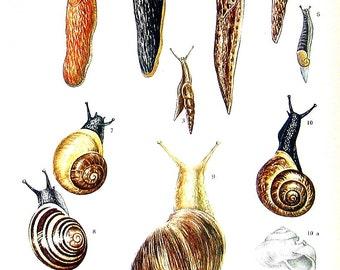 Snails and Slugs - 1973 Vintage Book Page 10 x 7