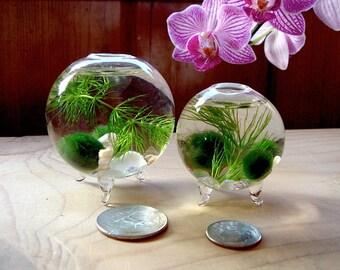 Zen. Nano. Orb. Marimo Ball. Ecosphere.Terrarium