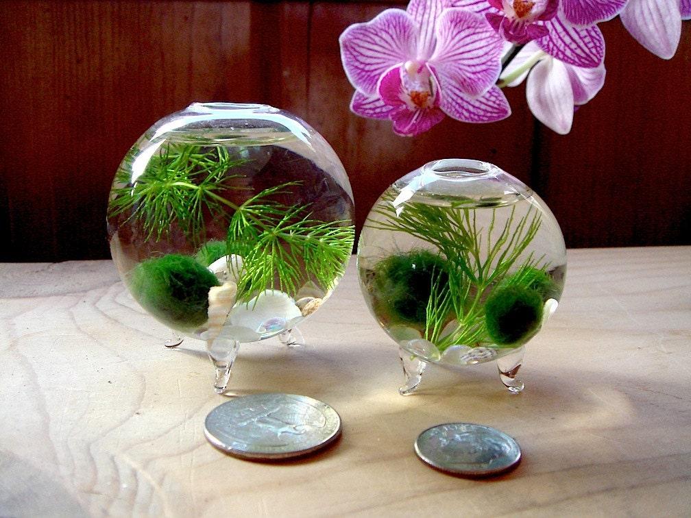 Sale zen nano orb marimo ball ecosphere terrarium for Betta fish moss ball