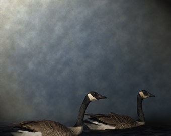 "Photograph on Metallic Paper 8"" x 8"" - Portrait of Geese"