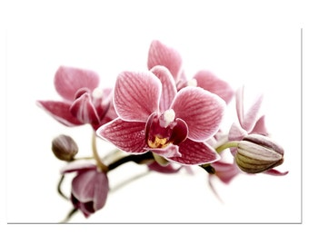 Botanical Art Photography Pink Orchid Flower Wall Decor Print Floral Nature