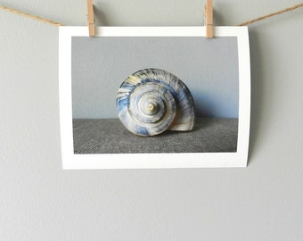 Seashell Photography, Blue Beach Decor, Seashell Print, Still Life Beach Wall Art, Natural Home Wall Decor,Blue & Tan Art,Beach Seashell Art