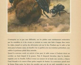 Scarab Beetle Print, 1947, French Natural History, Home Decor, Entomology, P 97, Anton Trieb, Frameable Art