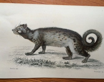 1787 mini animal prints original antique print hand coloured engraving