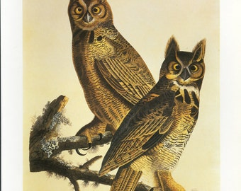 SALE Vintage Book plate of Owls, Buy 3, get 1 Free