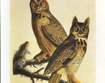 Owls Print Book Plate SALE Buy 3, get 1 Free