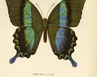 Butterfly Art Print Book Plate Sale, Buy 3 get 1 Free