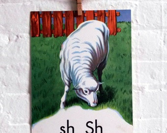 Vintage Large Flashcard Sh if for Sheep - Picture Flashcard
