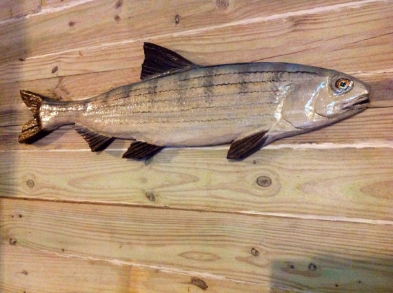 """Bonefish sculpture 40"""" chainsaw wooden taxidermy albulidae fly game fish originial Todd Lynd carving indoor outdoor decor wall mount art"""