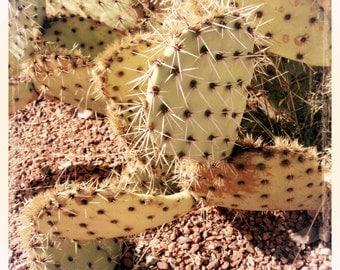 PHOTOGRAPH DESERT CACTUS