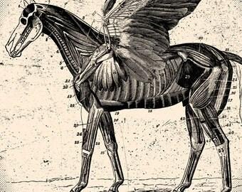 Pegasus Horse Anatomical Art Print