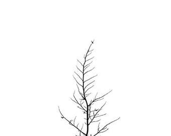 Minimal Tree Photography Print