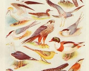 Vintage Antique 1930s Bird bookplate original lithograph art print illustration 3022