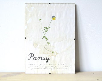Pressed Flowers- Pansy in Frame (4)
