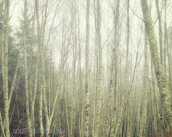 Aspen Tree Art, Nature Photography, Pacific Northwest Photography, Pacific Northwest Art, Woodland, Forest, Fog, Rustic Home Decor