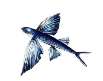 Fish drawing etsy for Flying fish drawing