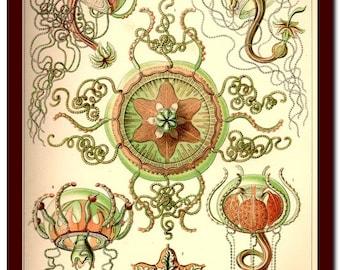 Jellyfish Poster Vintage Natural History  Art Print: Ernst Haeckel  Scientific Illustration Art Print