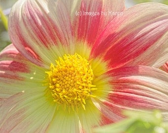 Flower Photography - Fine Art Photography - Red and Yellow Dahlia