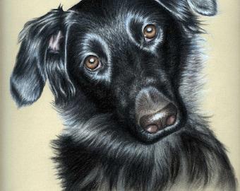 Dogs Eyes II - Fine Art Print