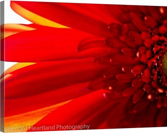 Large Photo Canvas, Macro Red Daisy, Macro Photography, Nature Photography, Macro Nature, Red Flower Art, Red Home Decor, Canvas Wrap