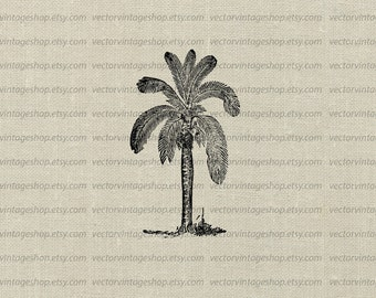 Palm Tree Clipart Vector, Tropical Theme Wax Palm Graphic Clip Art, Vintage Botanical Illustration, Commercial Use, Instant Download