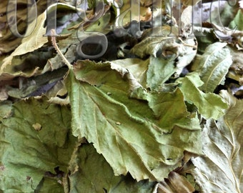 Hazel leaves. Dried. Organic herbal tea 40g.