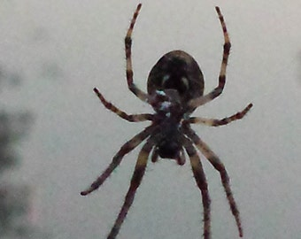 Digital photo photography / spider in web / foggy / evening / late summer evening