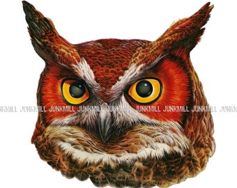 WISE OWL - Large Digital Printable Image - Vintage Great Horned Owl Lithograph Illustration, Single Image for Wall Art & Transfers, 8 x 10