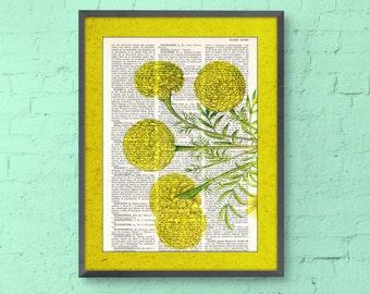 African marigold flower Botanical studio print on Dictionary-wall art decor tagets - flower print, wall decor yellow, Flower art BPBB074b