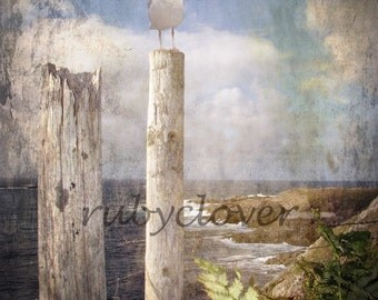 PERILOUS POSITION, White Seagull Perched on a Stump, DONEGAL, Ireland, Bird Watcher, Irish Nature Photography, Seascape, Grunge Texture