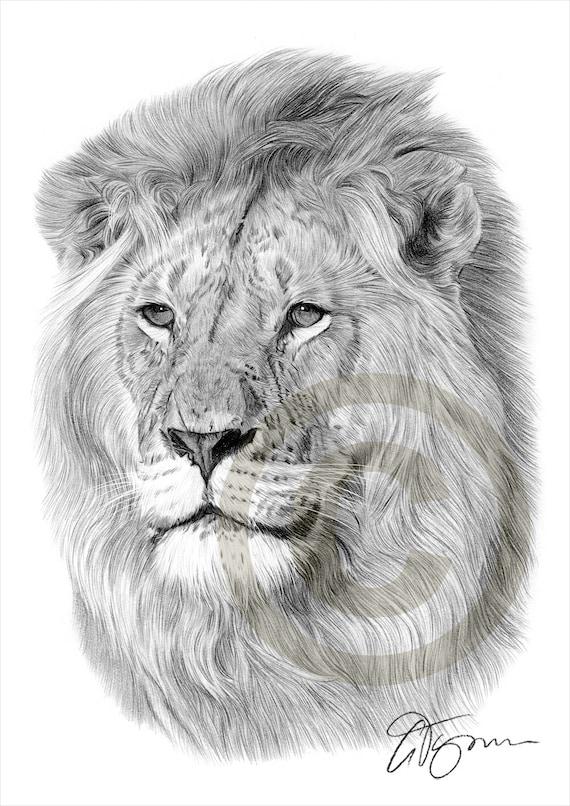 Leone Africano Matita Disegno Opera Di Formato A4 Stampa
