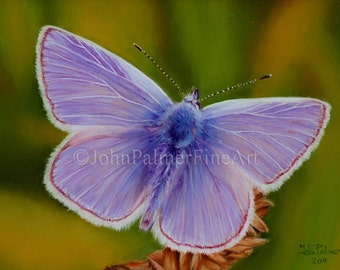 Butterfly painting, butterfly picture, butterfly print from my original pastel painting of a Common blue butterfly.