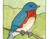 Spring Birds Card Set