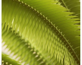 Nature Photography  - Green - Lemongrass -  Fine Art Photograph - Plant - Green Leaves - Oversized - Fern - Alicia Bock - Botanical Art