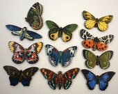 Exotic Butterflies - Collection of 11 Wooden Laser Cut Pieces