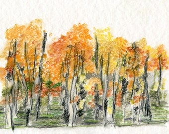 Drawing / original / The ASPEN GROVE  //  water soluble pencils  ooak