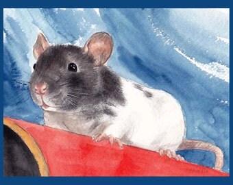 Pip the Baby Rat