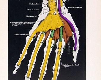 how to stop shoe rubbing achilles tendon