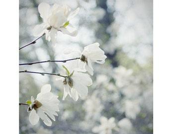 Star Magnolia Print, Shabby Chic  Decor, Floral Art Print, White Flower Photography, Bedroom Decor