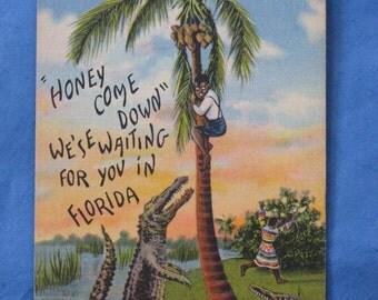 vintage Florida Postcard Alligator
