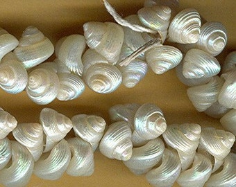 vintage tiny shell beads italian shell beads OFF WHITE or ivory color 1950s 25 beads embellishment sew on antique shell beads