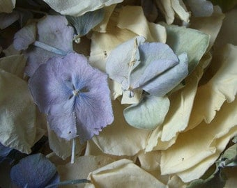 Ivory Rose and Blue Green Hydrangea Petals - Freeze Dried - 5 cups