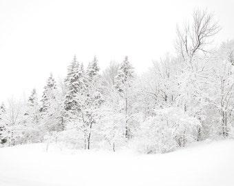 Winter photography, snowy forest, wonderland, winter wedding, nature, icing sugar, powder snow, wonderland, black and white, neutrals