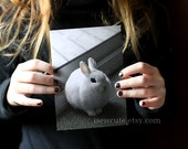 Blank Card With Envelope - All Occasion Greeting Card - Winter White Bunny Rabbit Puffed Up, Unique Cute Photo Greeting Card by isewcute