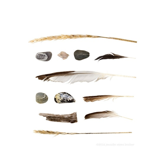 Beachcombing series (No.48) - 8 x 8 photograph - feathers, grasses, beach stones, mussel shell