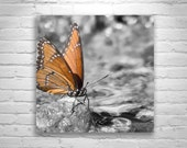 Butterfly Art, Butterflies, Butterfly Print, Insect Art, Square Print, Square Art, Viceroy Butterfly, Nature Photography, MurrayBolesta